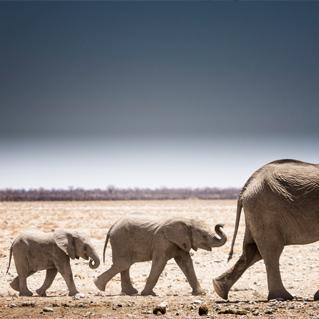 Scatti d'Africa - Canon